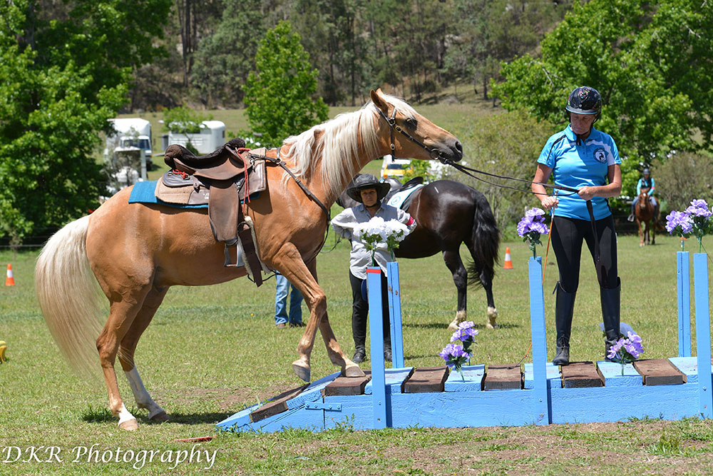 Fernances Creek, Working Equitation, Hunter Valley