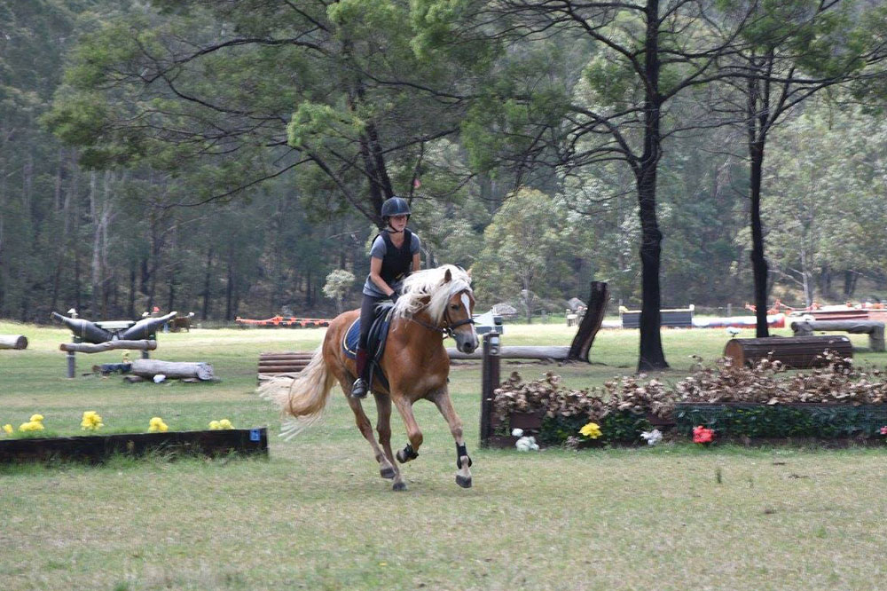 Haflinger Horses, Fernances Creek, Hunter Valley